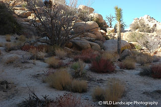 Joshua Tree, Desert, Landscape, Photographer, Nature