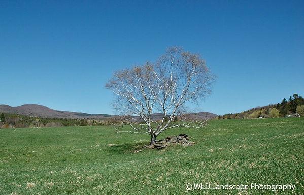 Spring, Ashland, New York, Photograher, Photography, Mountan, Nature, Seasons, Photo, Mountain, Nature