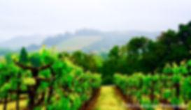 Napa, Wine, Spring, Seasons, Photographer, Photography, Photo, Ladscape, Nature