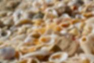 Sea shells, ocean, beach, atlantic