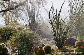 Living Desert, Palm Desert, California, Desert, Landscape, Photographer, Nature