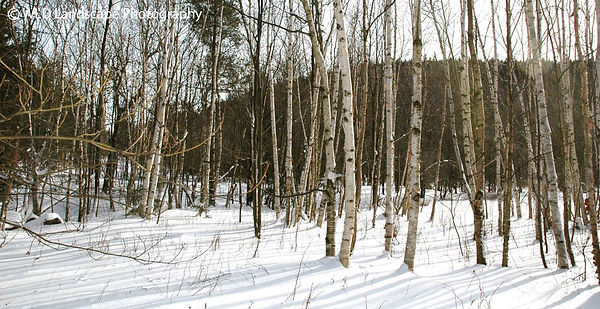 Mountain, Woods, Windham, New York, Winter, Snow, Photo, Photography, Landscape