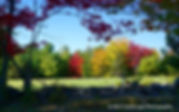 Autumn, Fall, Trees, Landscape, Photography, Photo