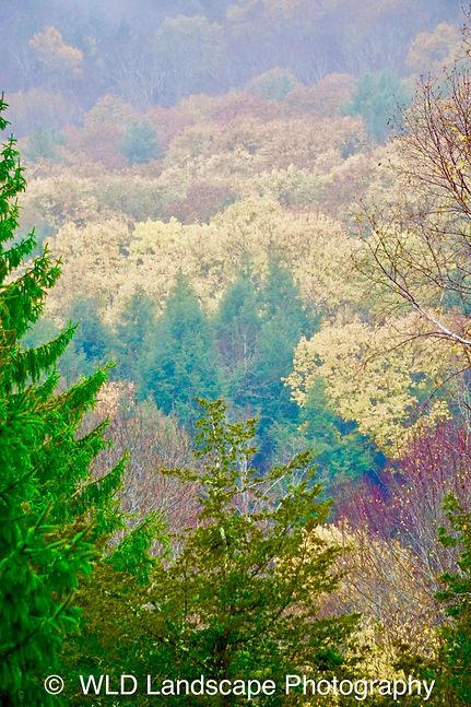 Autumn, Fall, Pines, Trees, Mountain, Windham, New York, Nature, Landscape