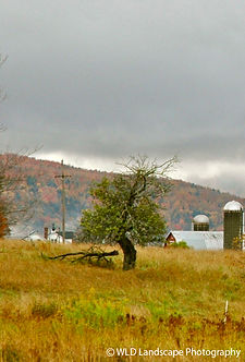 Barn, Nature, Farm, Tree, Field, Windam, New York, Photo, Photographer, Photography, Mountain