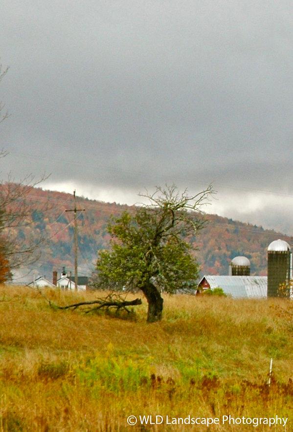 Barn, Nature, Farm, Tree, Field, Windam, New York, Photo, Photographer, Photography, Mountain