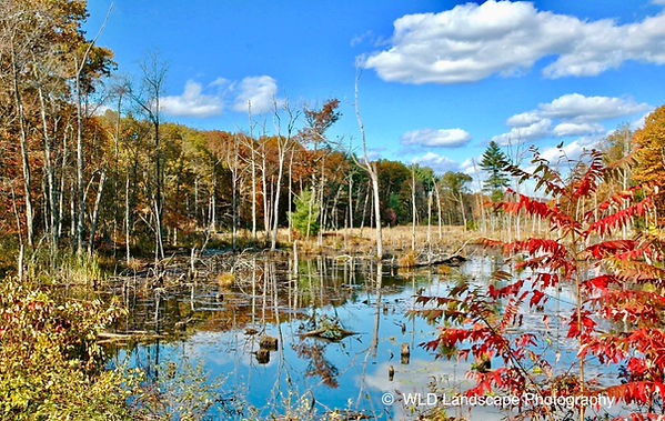 Columbia County, New York, Woods, Mountains, Nature, Photography, Photographer