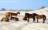 Horses, Landscape, Photography. Nature