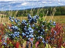 Fruit ready for harvest.jpg