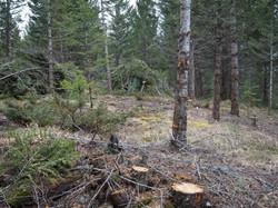 Wildfire Hazard Reduction