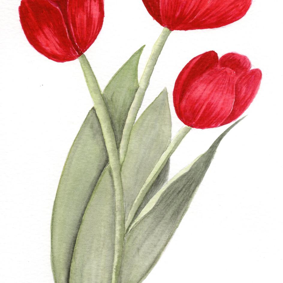 Tulipas vermelhas.jpg