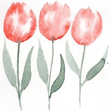 tulipa laranja.jpg