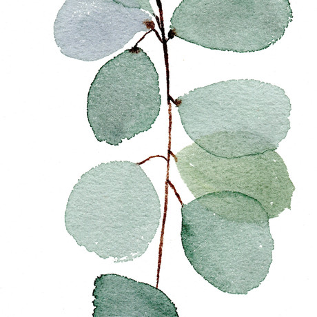 ramo de eucalipto.jpg