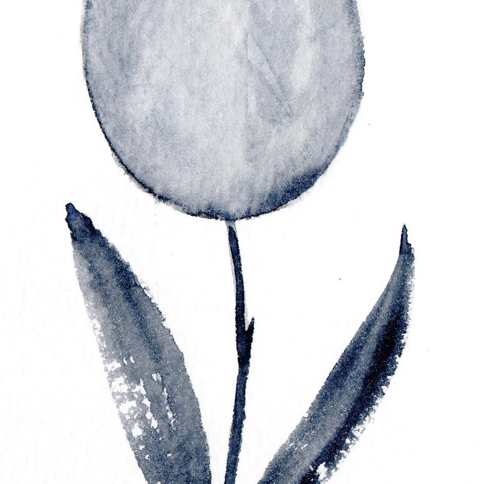 Tulipa negra.jpg
