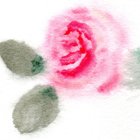 rosa 4.jpg