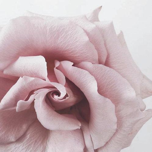 Simple & Elegant Rose PC