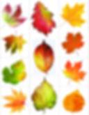 Printable Leaf.jpeg