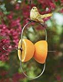Fruit Spear for the Birds