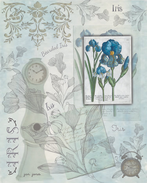 Iris by Jan Jones (Print)