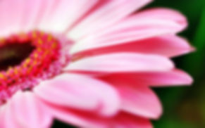 240-fleur-fleurs-nature.jpg
