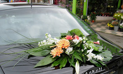 fleurs 240