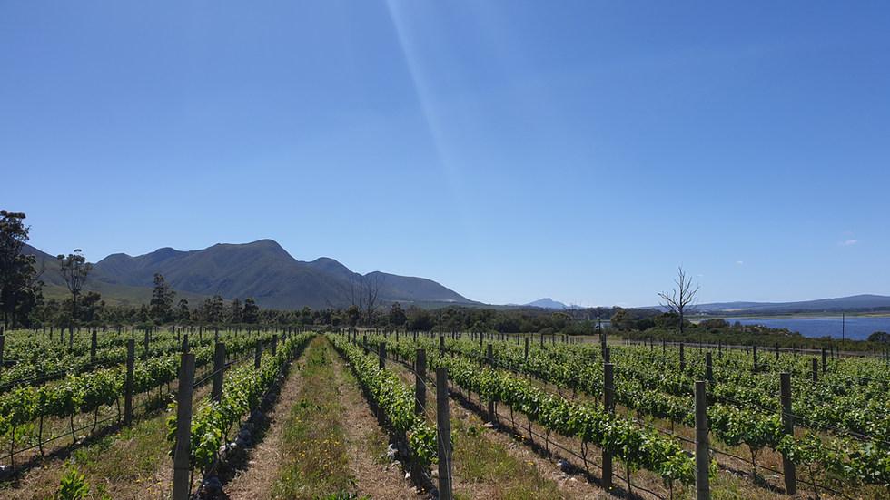 Stonefields Vineyard