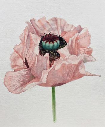 Skye Loyd-113 Poppy.jpg