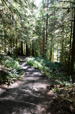 Sol Duc Forest Path