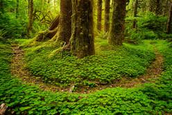 Thomas -119 forest path u shape.jpg
