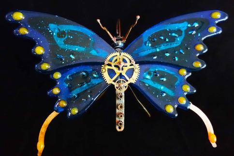 Butterfly web.jpg
