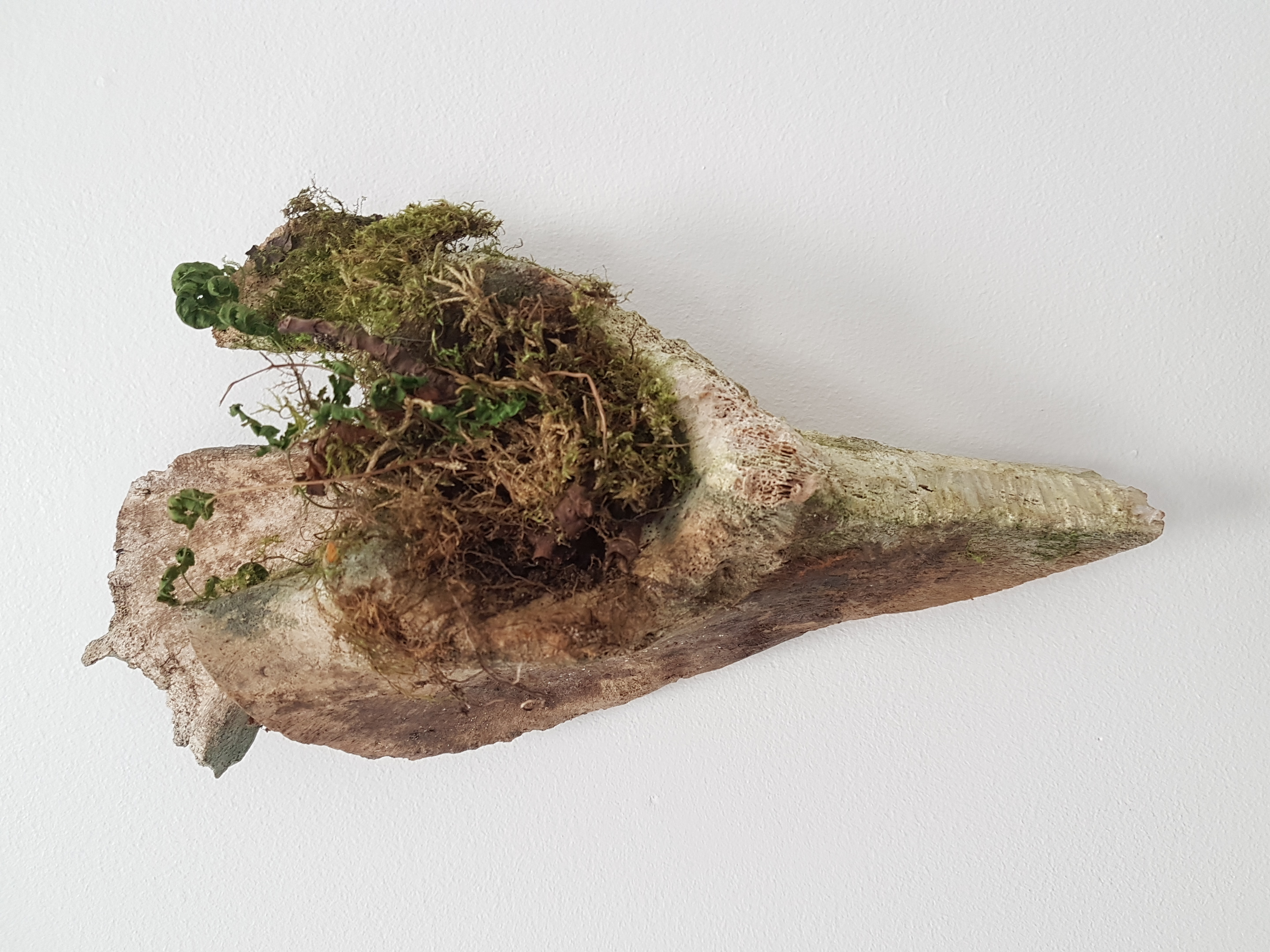 Bone with moss landscape