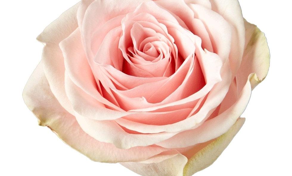 Amorosa - Roses