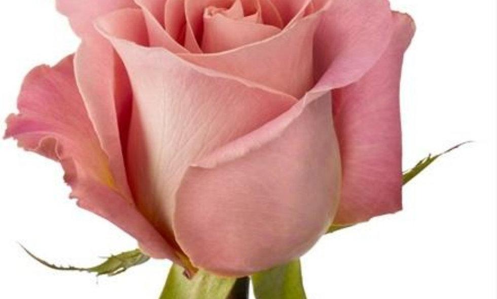 Hermosa - Roses