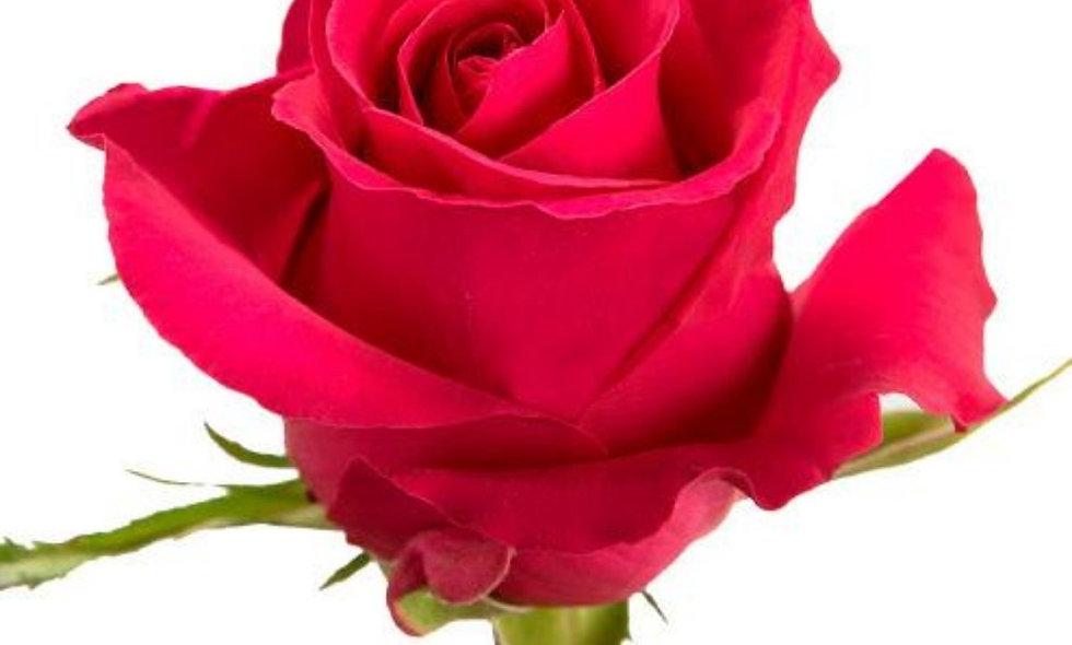 Gotcha - Roses