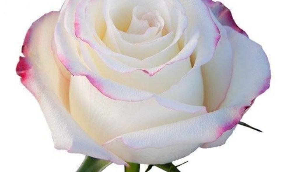 Sweetness - Roses