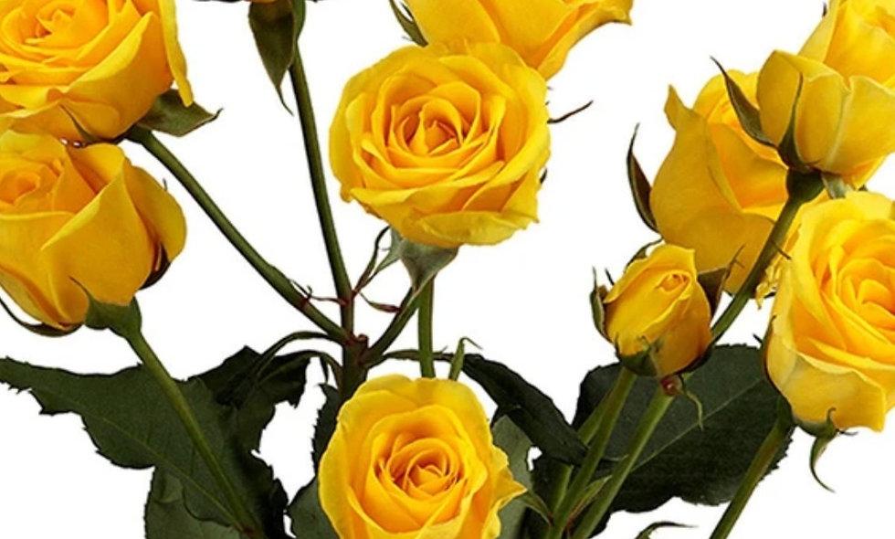 Jenny - Spray Roses Yellow