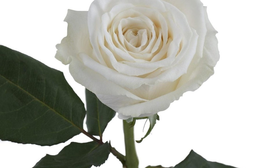 Playa Blanca - Roses