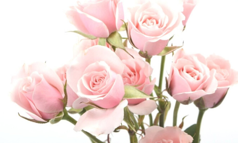 Blushing Majolika - Spray Roses pink