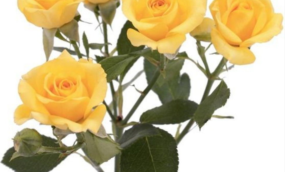 Fire king - Spray Roses Yellow