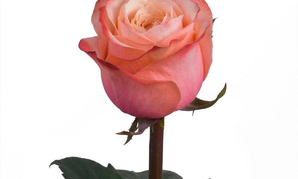 Kahala - Roses