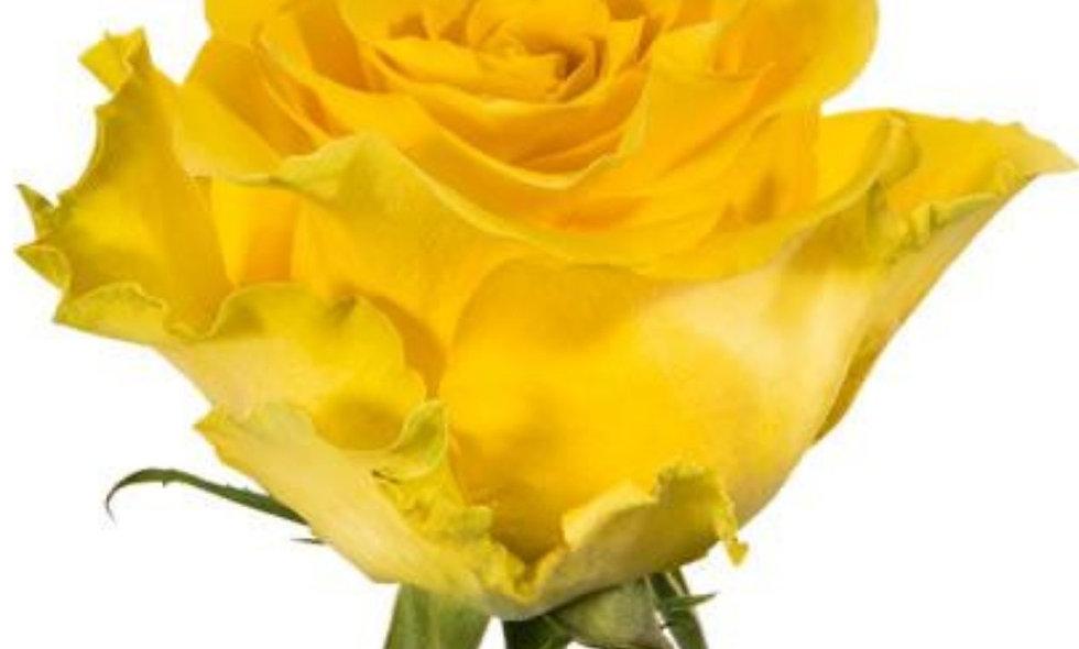Regatta - Roses