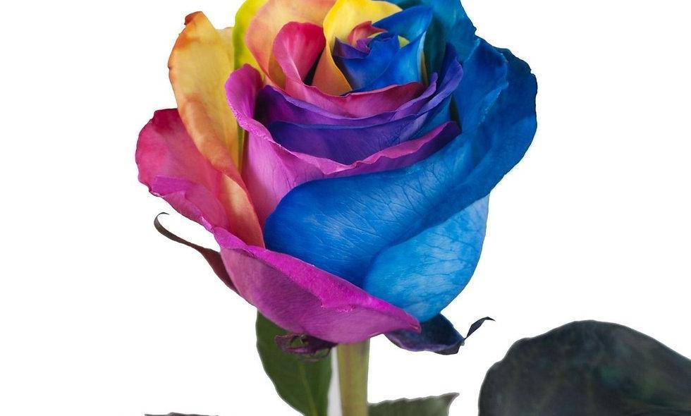 Rainbow - Roses