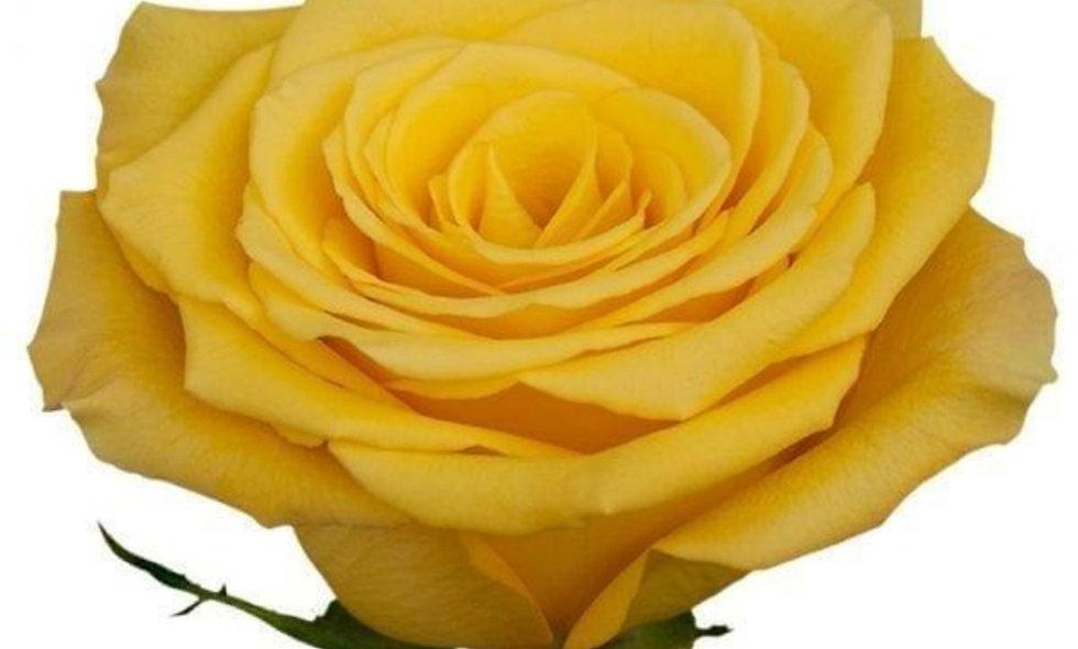 Bikini - Roses