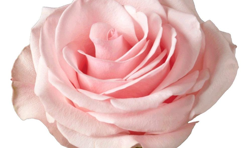 Novia - Roses