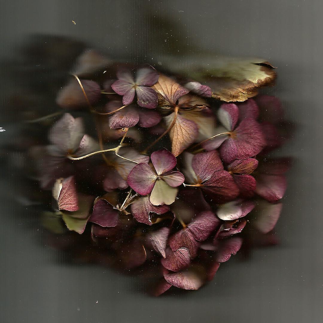 Fleur mauves- site.jpg