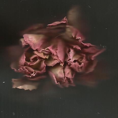 Fleur2 6-site.jpg