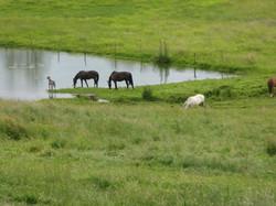 Chevaux et Luna à l'étang, Flée