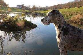 Chien de garde posant devant un lac