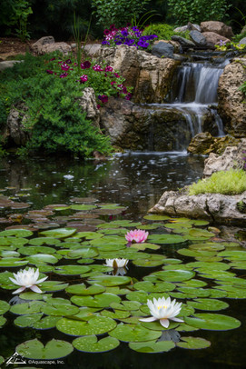 Waterfall and Lillies