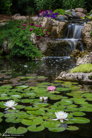 Watefall and Lillies